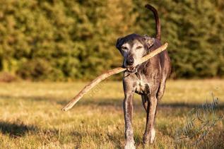 Hundeporträt outdoor-12