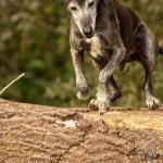 Hundeporträt outdoor 20 - mal wieder etwas aus der Newborn Fraktion ;-) - newborn, kinder, allgemein - stolze Eltern, Newborns, Kinderporträts, Kinder, Babyfotos