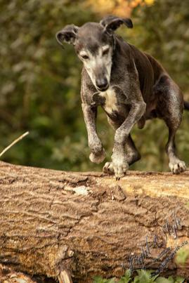 Hundeporträt outdoor 20 - Langweilige Hundefotos?---- neeeeeeee ;-) - tierportraets, outdoor, naturfotos - Tierfotos, outdoor, Hundeporträts, Geschenke, Ein Tag im Leben eines Fotografens, Draußen