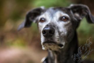 , Langweilige Hundefotos?—- neeeeeeee ;-), Fotostudio Light-Style`s Blog, Fotostudio Light-Style`s Blog