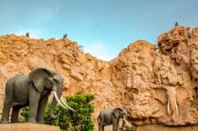 Südafrika 2019 1112 - Afrika - Ein Traum wurde wahr - urlaubsfotos, outdoor, offene-worte, non-commercial, naturfotos, natur, allgemein, alles, abseits-des-alltags -