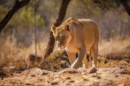 Südafrika 2019 1203 - Afrika - Ein Traum wurde wahr - urlaubsfotos, outdoor, offene-worte, non-commercial, naturfotos, natur, allgemein, alles, abseits-des-alltags -