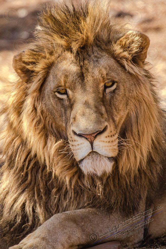 Südafrika 2019 1261 800x1200 - Afrika - Ein Traum wurde wahr - urlaubsfotos, outdoor, offene-worte, non-commercial, naturfotos, natur, allgemein, alles, abseits-des-alltags -