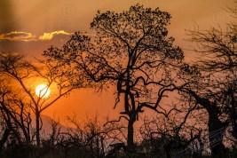 Südafrika 2019 1998 - Afrika - Ein Traum wurde wahr - urlaubsfotos, outdoor, offene-worte, non-commercial, naturfotos, natur, allgemein, alles, abseits-des-alltags -