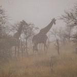 Südafrika 2019 2048 - Unsere Pocahontas - Interpretation , die ersten Shots - outdoor, making-of, allgemein, abseits-des-alltags - outdoor, Making of, Frauen, Draußen, Die Geschichte hinter den Fotos