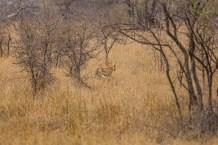 Südafrika 2019 2113 - Afrika - Ein Traum wurde wahr - urlaubsfotos, outdoor, offene-worte, non-commercial, naturfotos, natur, allgemein, alles, abseits-des-alltags -