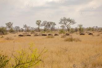 Südafrika 2019 2185 - Afrika - Ein Traum wurde wahr - urlaubsfotos, outdoor, offene-worte, non-commercial, naturfotos, natur, allgemein, alles, abseits-des-alltags -