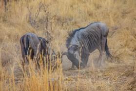Südafrika 2019 221 - Afrika - Ein Traum wurde wahr - urlaubsfotos, outdoor, offene-worte, non-commercial, naturfotos, natur, allgemein, alles, abseits-des-alltags -
