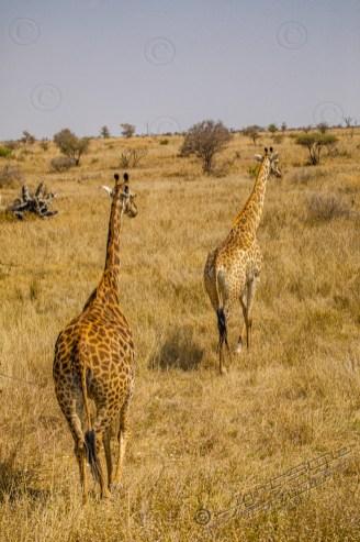 Südafrika 2019 2234 - Afrika - Ein Traum wurde wahr - urlaubsfotos, outdoor, offene-worte, non-commercial, naturfotos, natur, allgemein, alles, abseits-des-alltags -