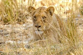Südafrika 2019 2303 - Afrika - Ein Traum wurde wahr - urlaubsfotos, outdoor, offene-worte, non-commercial, naturfotos, natur, allgemein, alles, abseits-des-alltags -