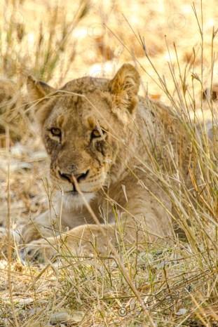 Südafrika 2019 2312 - Afrika - Ein Traum wurde wahr - urlaubsfotos, outdoor, offene-worte, non-commercial, naturfotos, natur, allgemein, alles, abseits-des-alltags -
