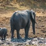 Südafrika 2019 2501 - Shades of Grey lässt grüßen - offene-worte, modelle, allgemein, aktfotos - Geschenke, Frauen, Fetisch, erotische Porträts, Aktfotos