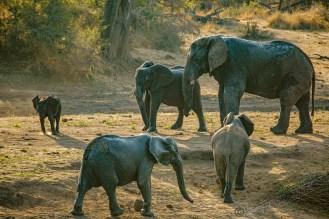 Südafrika 2019 2901 - Afrika - Ein Traum wurde wahr - urlaubsfotos, outdoor, offene-worte, non-commercial, naturfotos, natur, allgemein, alles, abseits-des-alltags -