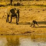 Südafrika 2019 2903 - Fotos & Weihnacht in 2020 - newborn, babyfotos - Newbornfotos, Newborn, Babyfotos, babybauch