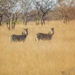Südafrika 2019 446 - Spaß muss sein :-P - allgemein - Hochzeit, funstuff, Fun