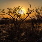 Südafrika 2019 527 - Corona-krise - aktuell nur nach Termin - status, rund-um-rodenbach, non-commercial, naturfotos, allgemein -