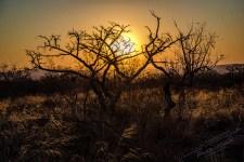 Südafrika 2019 527 - Afrika - Ein Traum wurde wahr - urlaubsfotos, outdoor, offene-worte, non-commercial, naturfotos, natur, allgemein, alles, abseits-des-alltags -