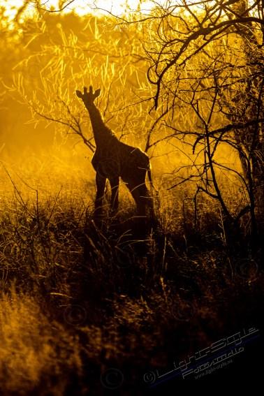 Südafrika 2019 66 - Afrika - Ein Traum wurde wahr - urlaubsfotos, outdoor, offene-worte, non-commercial, naturfotos, natur, allgemein, alles, abseits-des-alltags -