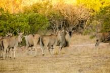 Südafrika 2019 751 - Afrika - Ein Traum wurde wahr - urlaubsfotos, outdoor, offene-worte, non-commercial, naturfotos, natur, allgemein, alles, abseits-des-alltags -