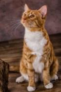 Hunde & Katzenporträts, Cats & Dogs, Fotostudio Light-Style`s Blog