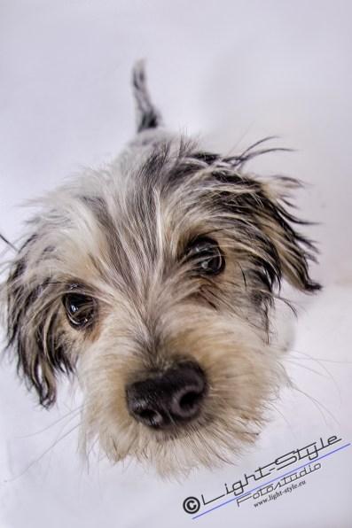 T20W0104 15 - Weiter gehts...... ;-) - tierportraets, allgemein - Tierporträts, Tierfotos, Hundeporträts, Hunde