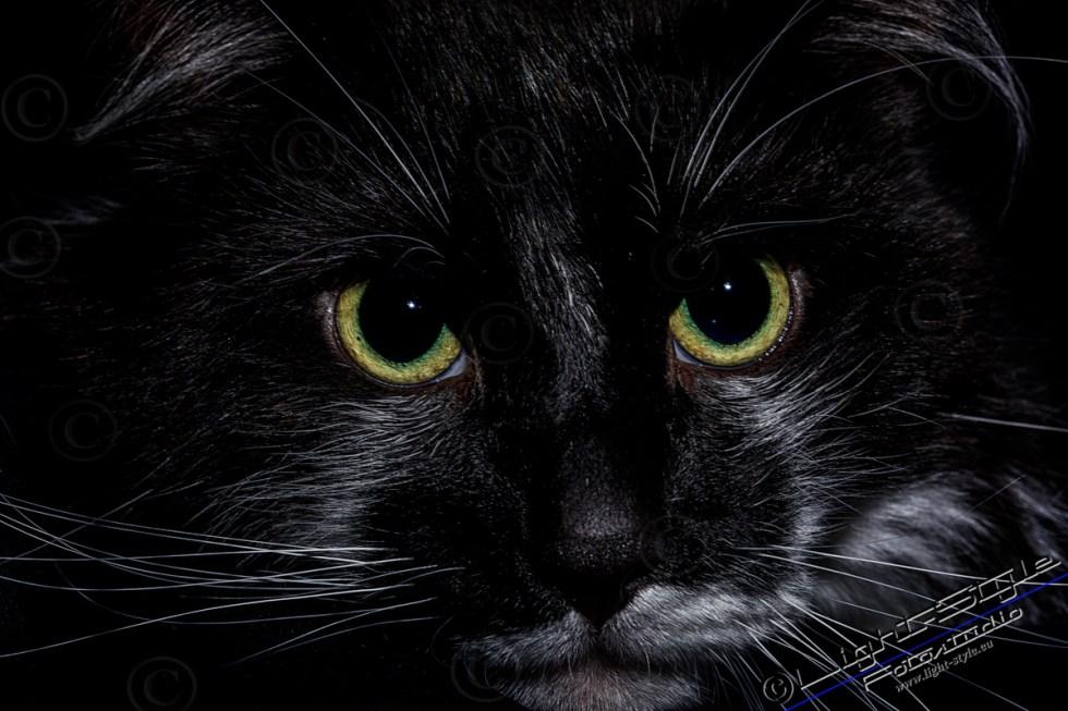 Tierporträts - Faces