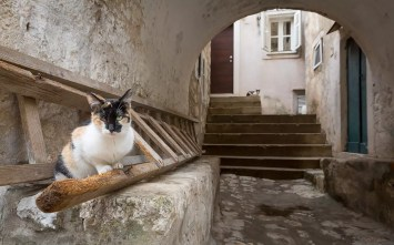 dubrovnik cat in ladder