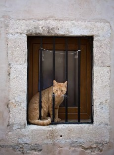 dubrovnik cat in jail