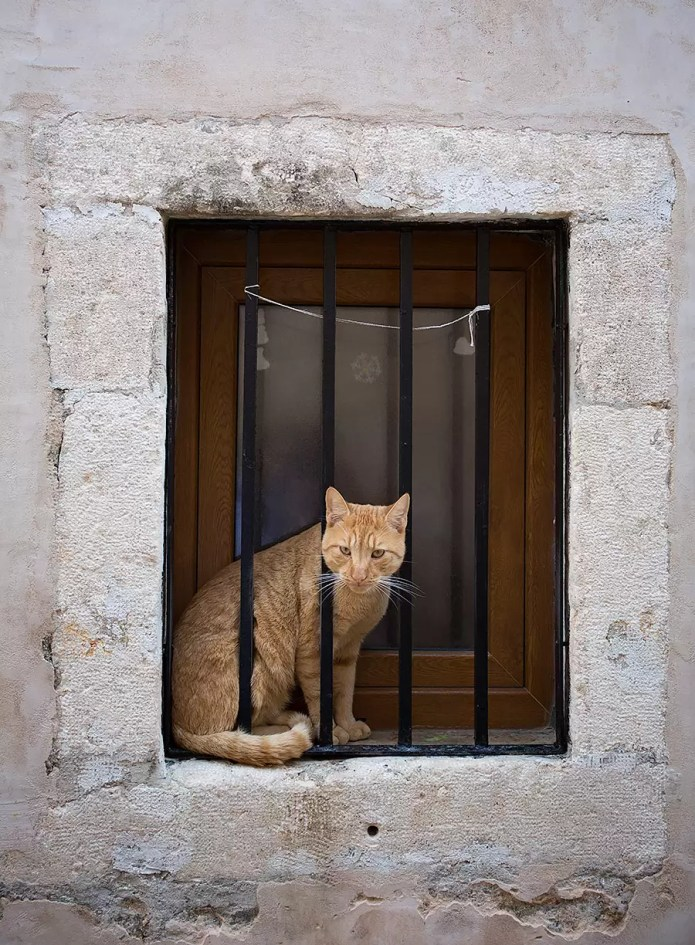 dubrovnik cat in jail