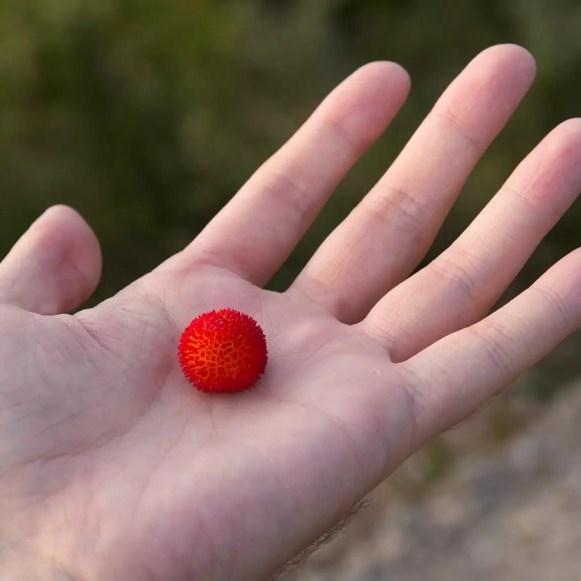 The fruit turn red when they're ripe; this was one was almost there.