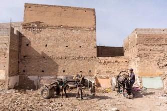 marrakech-working-donkeys