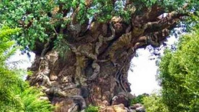 Photo of قصة الشجرة التي يسكنها شيطان ويعبدها الناس