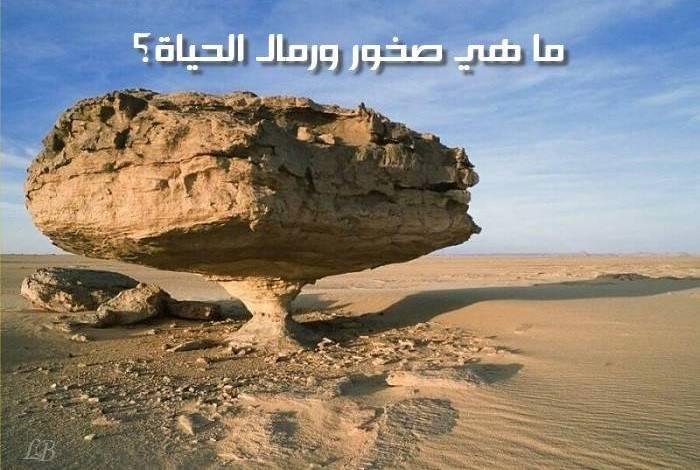 Photo of هل سألت نفسك يوماً ما هي الصخور الكبيرة في حياة الإنسان – قصة واقعية