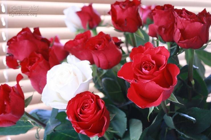 وردة حمراء و وردة بيضاء تزين قصر الحاكم! إنها علامة من الله