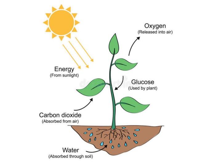 Sun Energy Solar