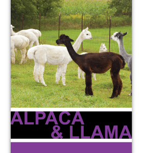 Northeast Alpaca and Llama maintenance feed