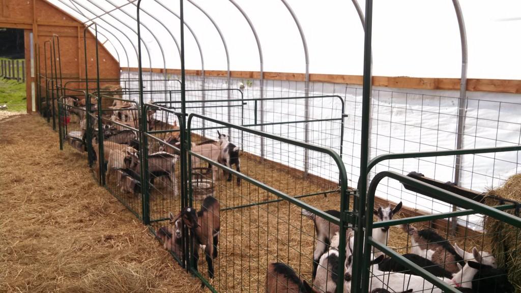Panels Configured at Asgaard Farm