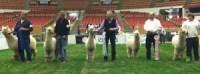 MI International Alpaca Fest