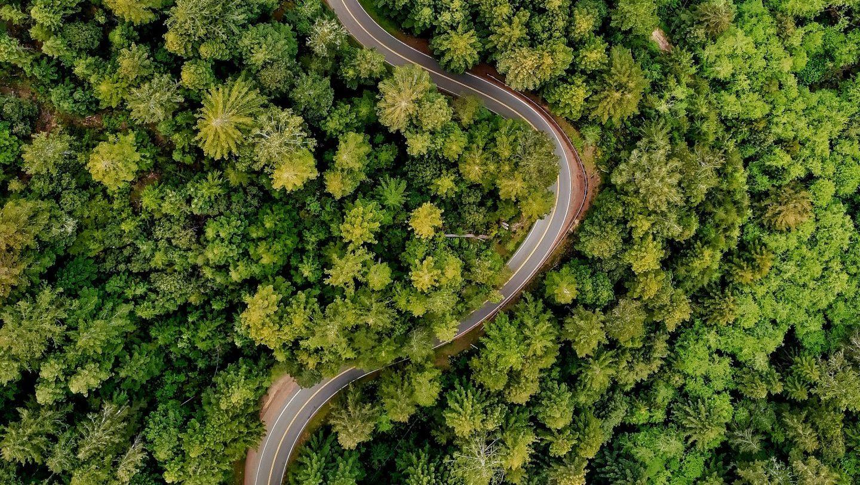 Roads lead to Amazon Destruction