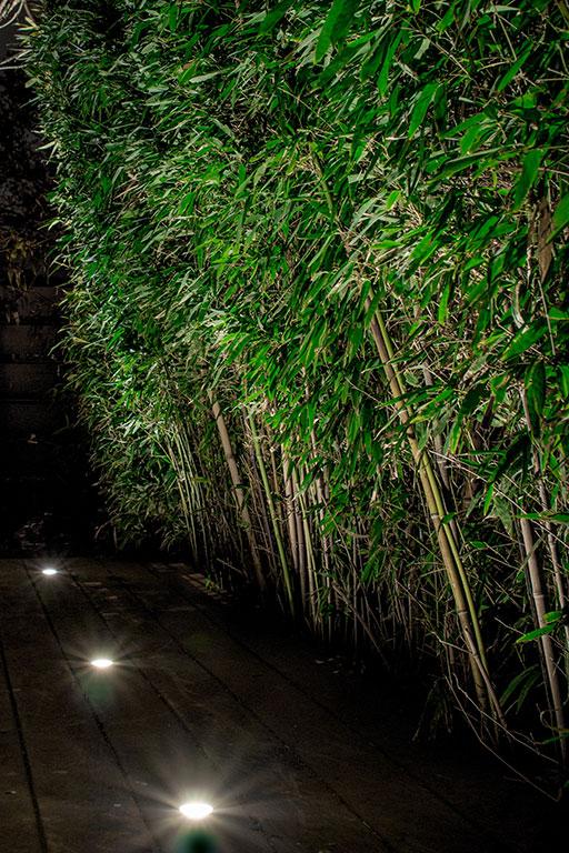 Up Lighting On Bamboo Landscape Light Up Nashville