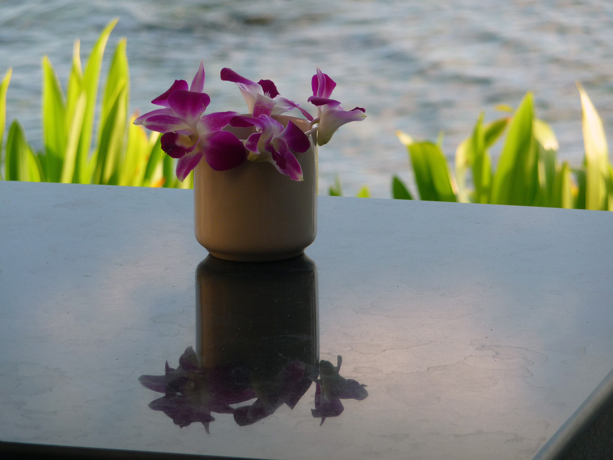 Fleur - Photo : Costel Subran