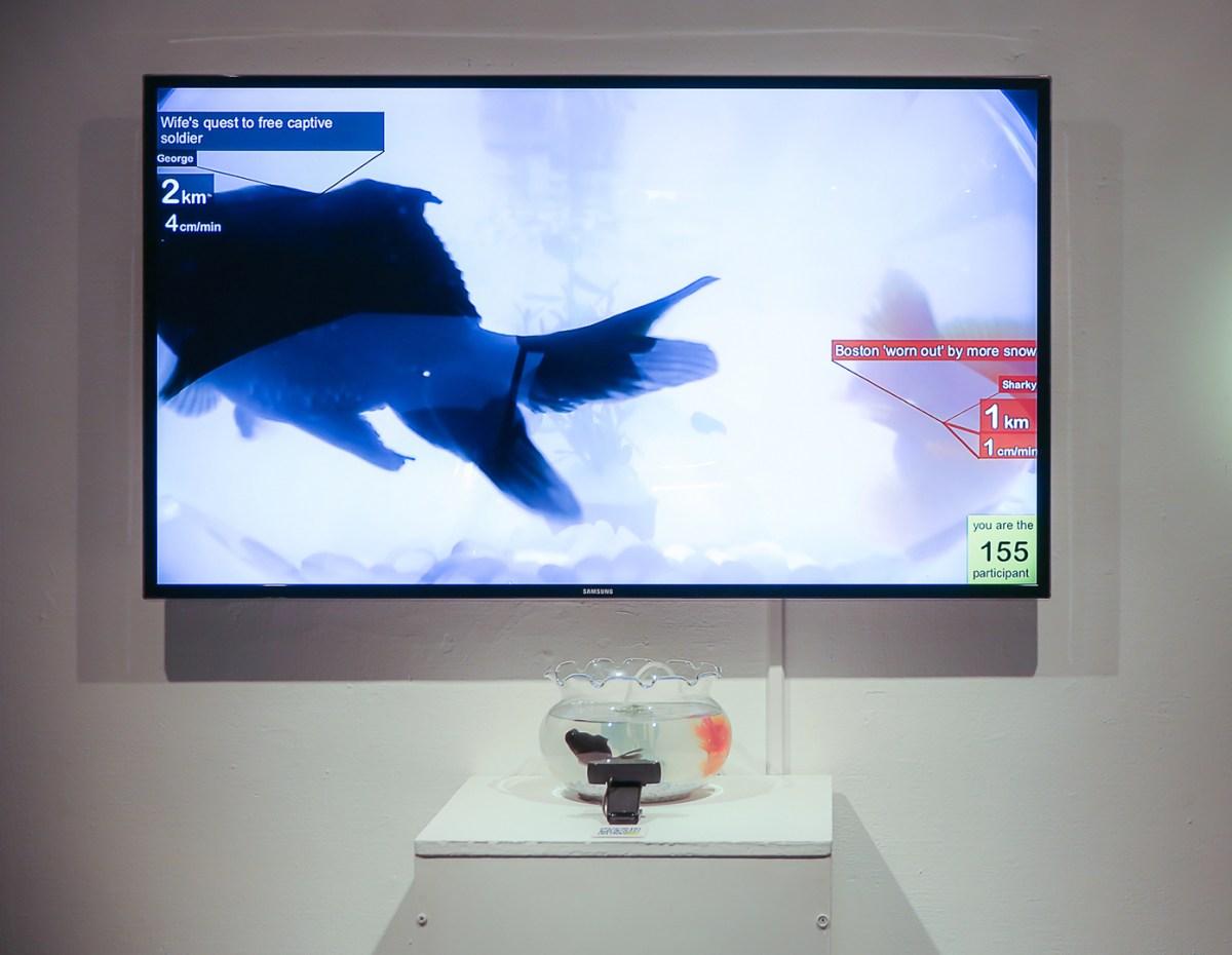 I & C (Cedar & Iris), Surveillance, 2014, installation temps réel © Cedar Zhou