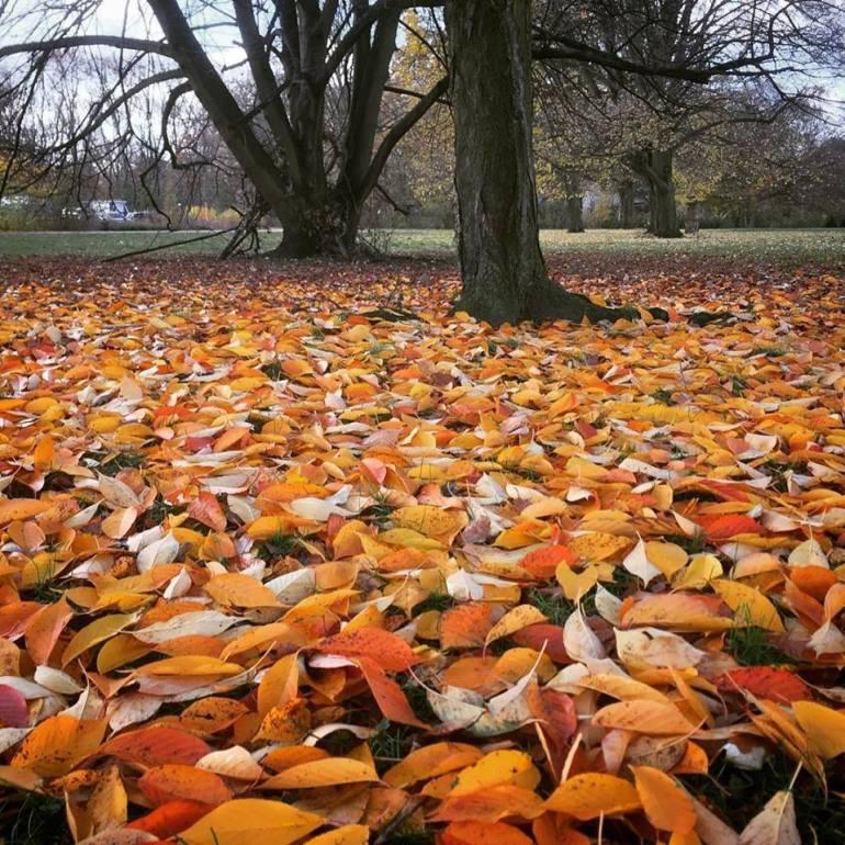 #paracegover Descrição para deficientes visuais: a imagem mostra o chão de um parque totalmente coberto por folhinhas alaranjadas. As árvores estão peladas. — at Treptower Park.
