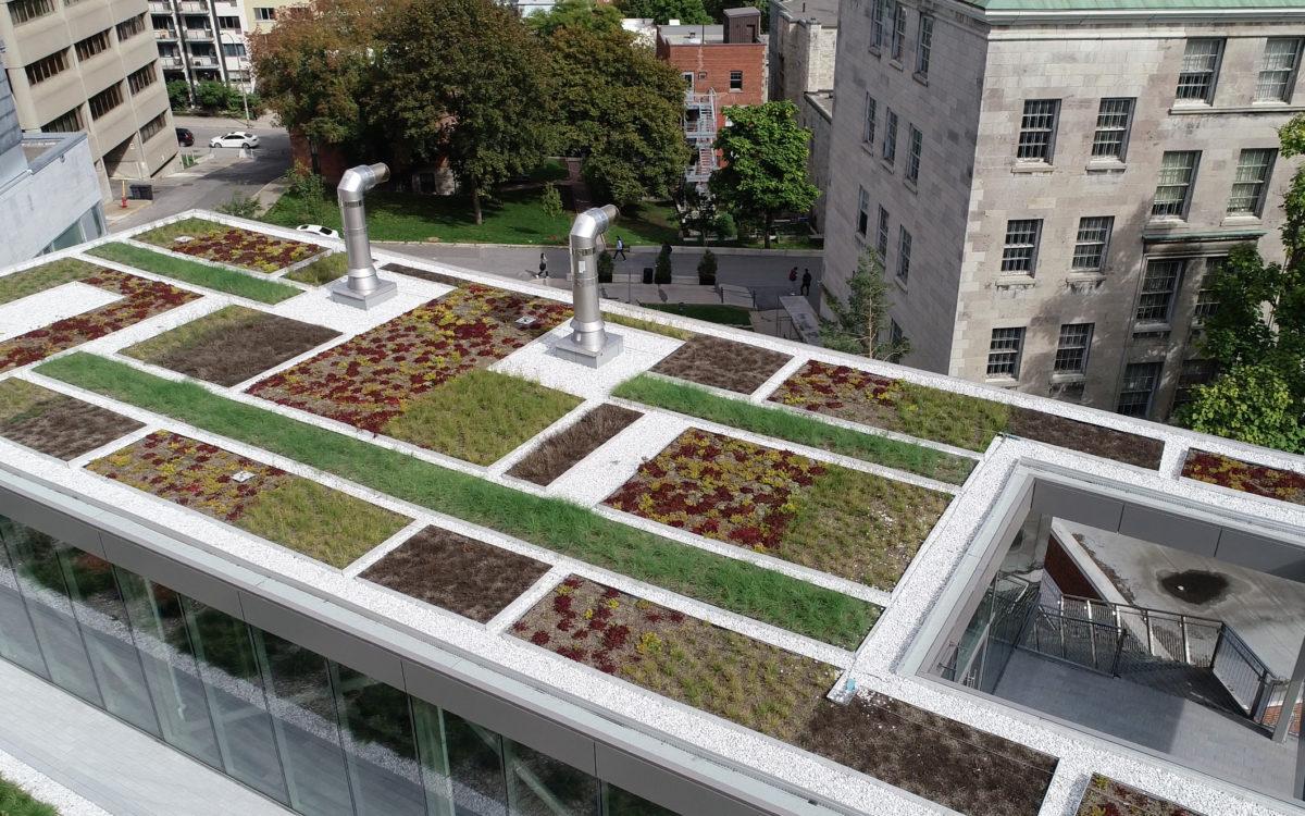 Toit vert - Université McGill - La ligne verte (4)