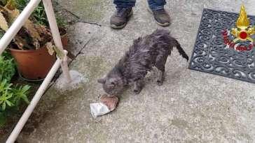 Gatto incastrato in una tubatura salvato dai VVF a Borzonasca