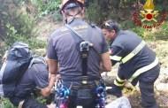 Campiglia, pino crolla lungo il sentiero: 50enne soccorso dai Vigili del Fuoco