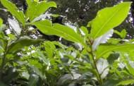 Recco, al via questa mattina i lavori di potatura di Valle Verde