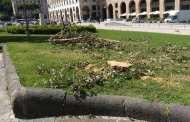 Genova - Strage di alberi in piazza della Vittoria