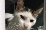 Savona, rimane incastrata in un tombino: gatta salvata da un passante
