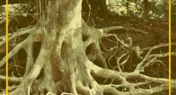 Destroy the Roots of Shame Based Living -The Lie of Unlovable